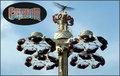 Huss Condor rides