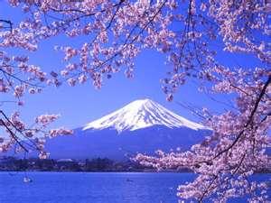 Giappone fiore Garden