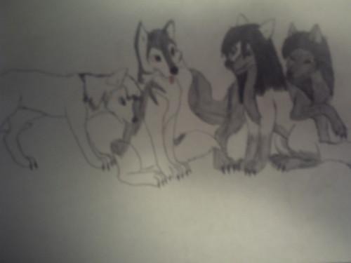 Me and my siblings as pups