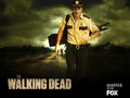 the-walking-dead - Rick Grimes wallpaper