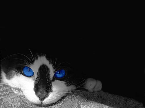blue eyed warrior