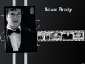 AdamBrodyWallpaper! - adam-brody wallpaper