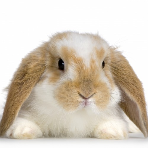 Stefan & Bunnies پیپر وال entitled Bunny