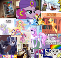 COLLAGE OF PONY