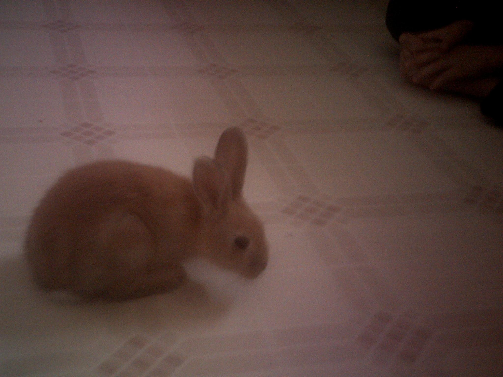 chloe   bunny rabbits photo 30442171   fanpop