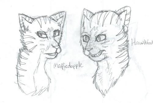 Warriors (Novel Series) Hintergrund entitled Dark Forest Katzen :p