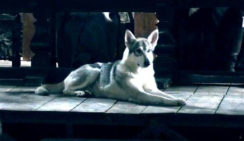 Grey Wind - Robb direwolf