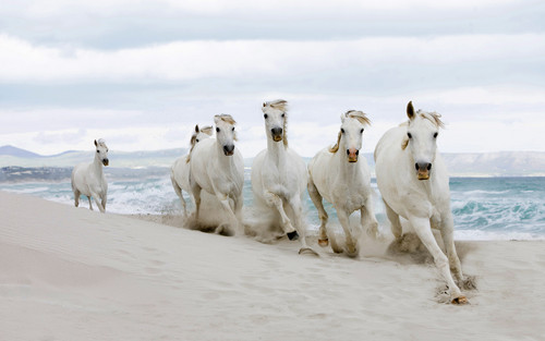 Kuda on the pantai