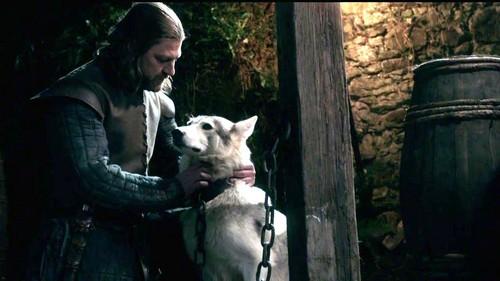 Lady and Eddard Stark