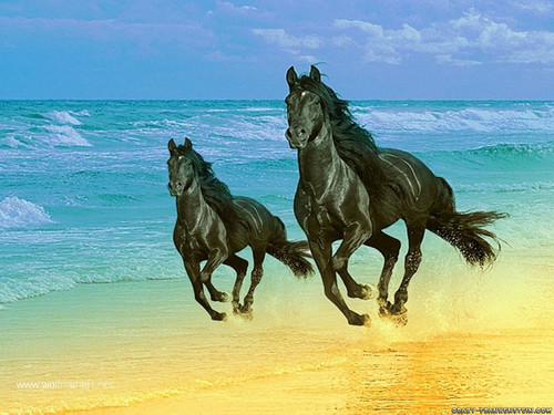 lebih horse