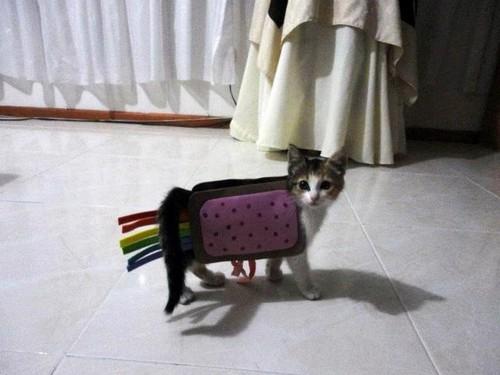 Nyan Cat Kitty Costume