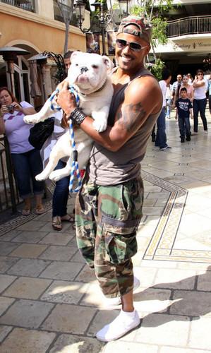 Shemar Moore Walks His Dog At The Grove