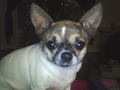 Tinker Bell - fanpop-pets photo