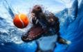Underwater कुत्ता