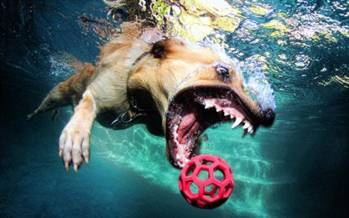 Underwater anjing
