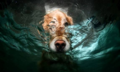 Underwater イヌ