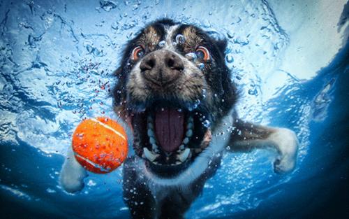 Underwater cachorros