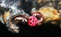 Underwater Aso