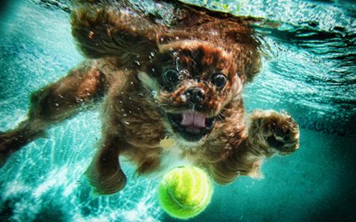 Underwater perros