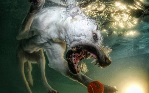 Underwater dogs - dogs Photo