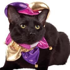 Webb Gato