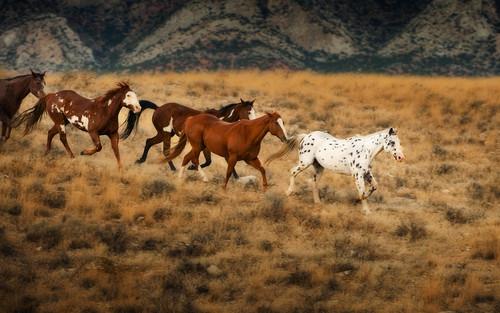 Wild Kuda in Wyoming