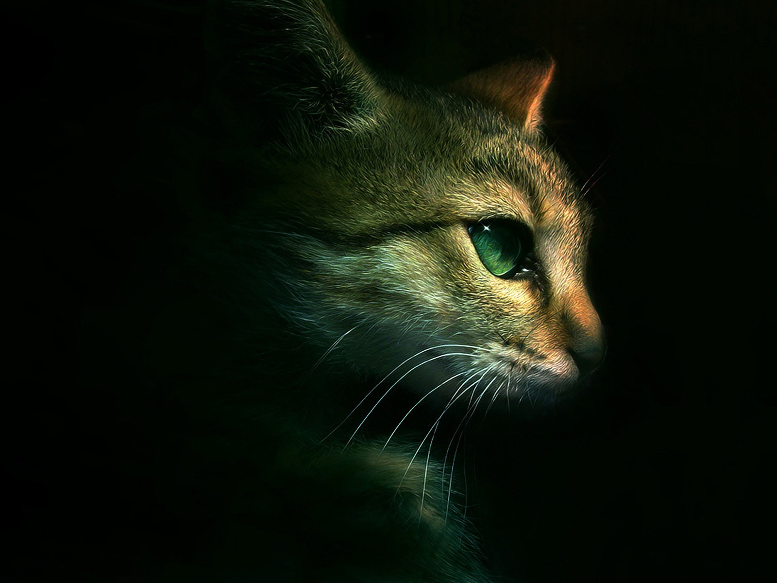 Dramatic Cat 2 Warrior Cats Forever Wallpaper 30405952