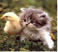 happy easter - cute-kittens photo