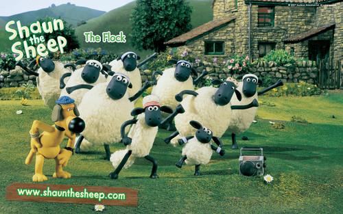 shaun the بھیڑوں, بھیڑ