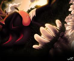 sleeping angel.....  - sonic-the-hedgehog Photo