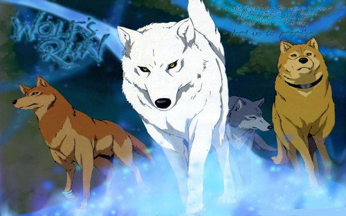 狼, オオカミ rain