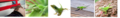 Banner! - dusk-101trxs-brave-green-anole photo