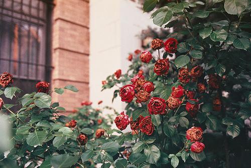 Мечты Beauty