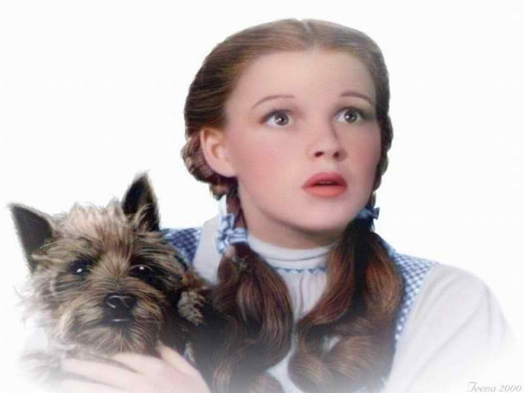 yorkshire_rose images Dorothy and Toto HD wallpaper and ...