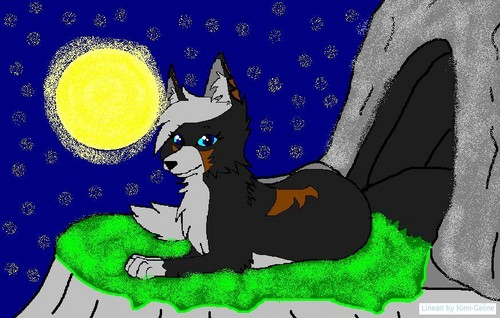 Hawkears (my warrior cat as a wolf)