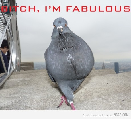 Kevin THe pigeon 2