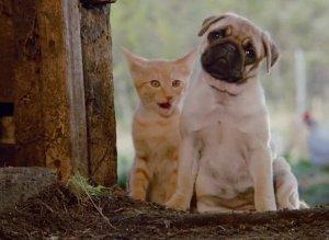 Milo and Otis pics