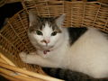Mittens In a Clothes Basket - cute-animals photo