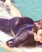 Louis' ass