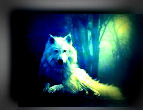 wolves images pretty wallpaper and background photos 30534191