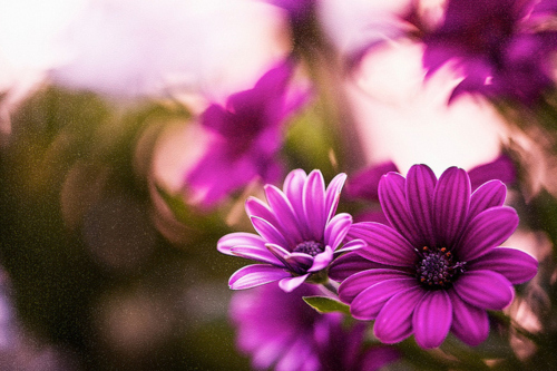 Purple Pictures <3