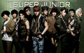 Super Junior !<3 - super-junior wallpaper