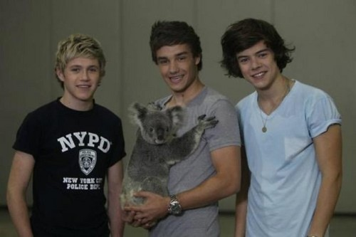 The boys and a koala