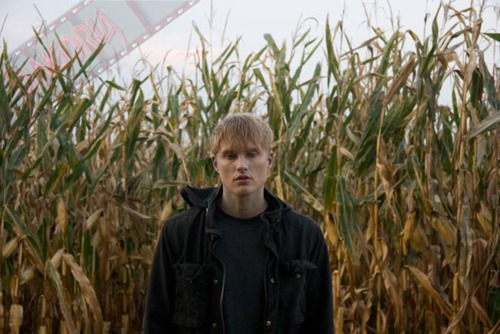 Toby Hemingway wallpaper with a grainfield, cultivated rice, and a corn entitled Toby