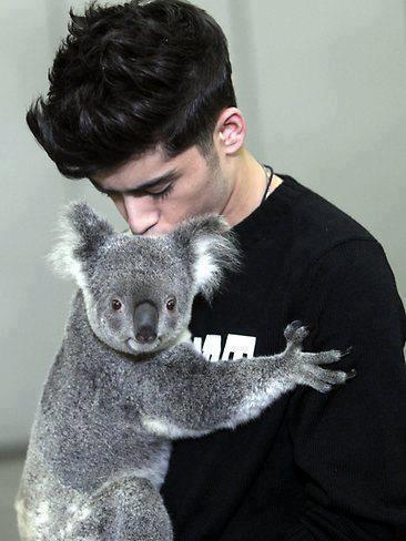 Zayn halik a koala madala (so cutteee)