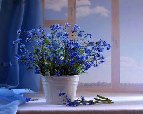 blue flores
