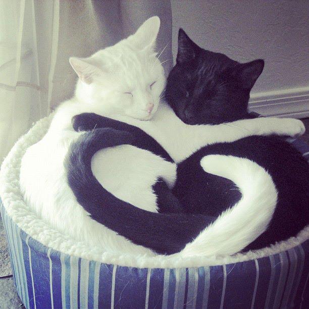 Cats cute cats