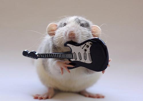 guitar hamster