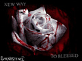new way to bleed - evanescence wallpaper