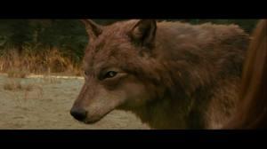 wolf!!!